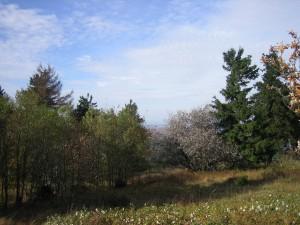 Taunus im Herbst Feldberg 2