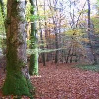 Taunus im Herbst Wald 7