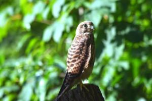 Ein Baumstumpf im Garten ermöglicht einen gewissen Überblick, BA Jochen Hiebel