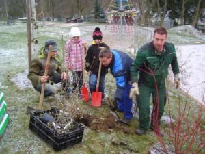 Schüler und Eltern halfen beim Pflanzen mit BABeate Graumann