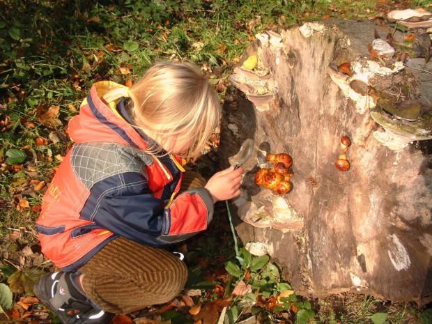 Umweltbildung Pilzbaum 620x465 Schatzsuche im Naturpark