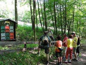 bild4 300x225 Bienen und Naturlehrpfad im Naturpark Thüringer Schiefergebirge/Obere Saale