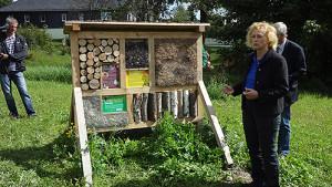 bild44 300x169 Neues Wildbienen  und Schmetterlingsparadies entsteht
