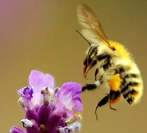 bild51 300x271 Neues Wildbienen  und Schmetterlingsparadies entsteht