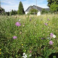 Dorfgarten Gahma / BA Kristin Pfeiffer-Geheeb