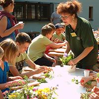 Naturführerin Birgit Grote stellt Wildpflanzen vor, BA Beate Graumann