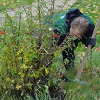Wildrosenpflanzung, BA Bernd Lippold