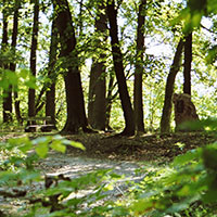 Blick in den Park von Knau, BA Petra Herzog