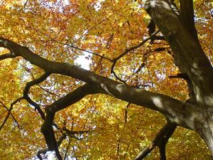 va21 300x225 Veranstaltungen im Naturpark im Monat Oktober