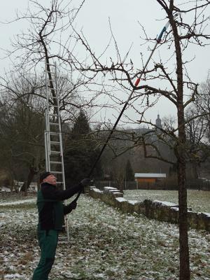 wald2 300x400 Landschaftspflege trotz winterlicher Kälte