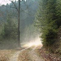 Wanderweg im Morgennebel, BA Beate Graumann
