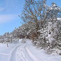 Winterlandschaft, BA Beate Graumann