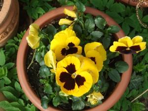 Garten-April-2012-003