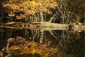 Herbst am Hammerwehr im Naturpark Saar-Hunsrück