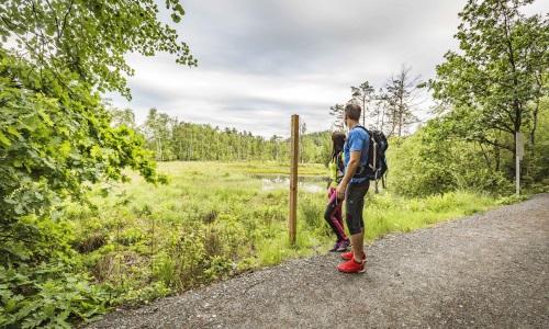 01 5 Bild Oberpfälzer Wald Wandern auf dem Goldsteig Foto Thomas Kujat Naturpark Oberpfälzer Wald