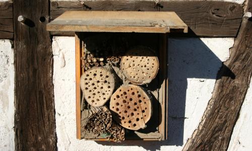 06052 Insektenhotel Beitrag Ein Hotel für Wildbienen