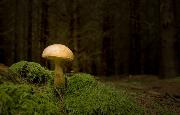 "Das Foto des Monats trägt den Titel ""Pilze"" - Copyright: Veronika Blum"