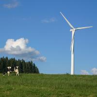 Windkraft im Einklang mit der Natur? © VDN / Gerd Fehrenbach