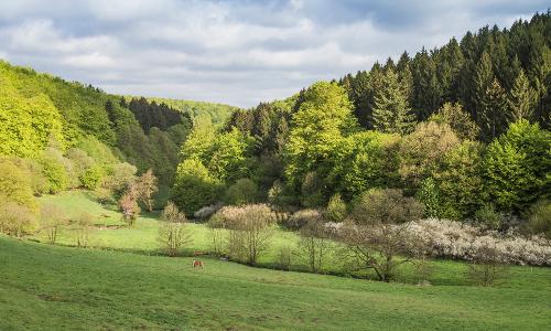 20150507 vProll redb Naturpark Solling Vogler im Weserbergland