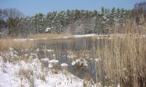 Copyright: Naturpark Dübener Heide