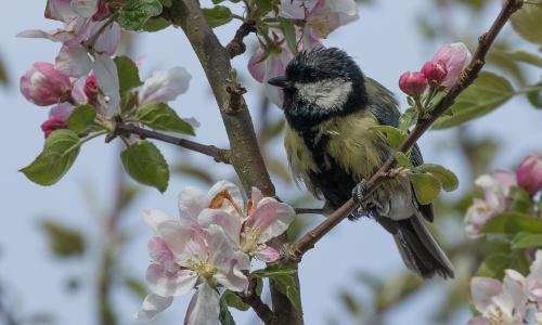 3600b Biologische Vielfalt  Naturschutz beginnt im Garten