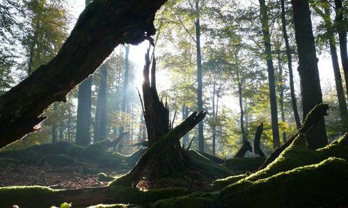 Abt. Faun im Heisterblock Michael Kunkel Beitzrag Einzigartiges Naturerlebnis ─ Naturpark Spessart