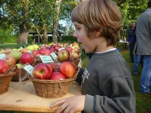 Wiederentdeckung alter Apfelsorten