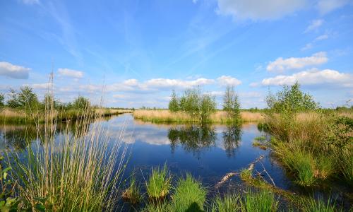 Andrea Habermann DSC 076417 beitrag Moor ohne Grenzen   Naturpark Bourtanger Moor – Bargerveen