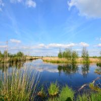 Copyright: Naturpark Bourtanger Moor - Bargerveen / Andrea Habermann