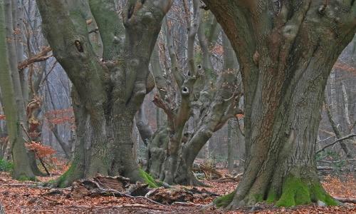 Baumgestalten Mehr als lauter Bäume – Erlebnisreiche Wälder in Naturparken