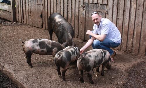 Bentheimer Schwein Foto Helmut Backers beitrag Kotelett vom Bunten Bentheimer Schwein mit Schalotten Zwetschgen Gemüse