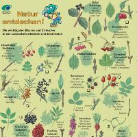Bestimmungshilfe Bäume und Sträucher - Copyright: Verlag Ulbrich und Papenberg