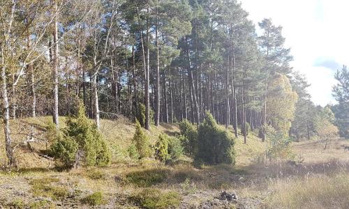 Binnendünen Waldb Vom Winde aufgeweht…