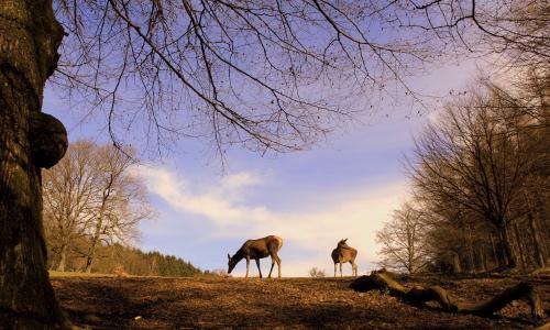 DSC06003 2b Naturpark Arnsberger Wald