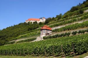 Weinberge im Naturpark Saale-Unstrut-Triasland