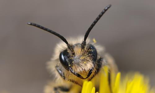 DSC 7212 Beitrag Ein Hotel für Wildbienen