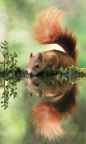 """Eichhörnchen Beitrag """"Faszination Natur""""   Naturerlebnisangebote in Naturparken"""