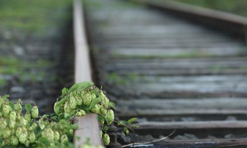 """Es werde grün """"Es werde grün"""" von Klaus Mayhack"""