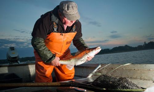 Fischerei köllnitz beitrag Köllnitzer Fischtöpfchen
