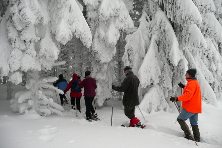 Florau Fauna Gruppe   30. Jan. 2010 263 500 300 Schneeschuhwandern   Natursport im Winter