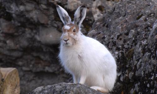 Fotolia 137344041 S beitrag Das Winterkleid der Tiere