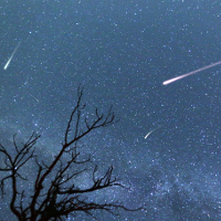 Composite image of shooting stars with a silhouette of a small tree during the 2015 Perseid Meteor Shower.