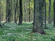 Frühlingswald - Copyright: VDN/Rainer Hunold