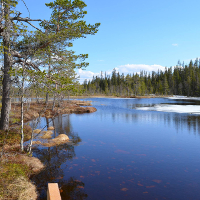 Fulufjället National Park - Copyright: VDN