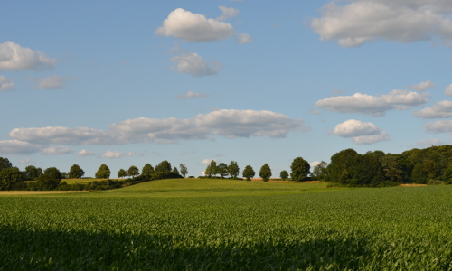 Hügellandschaft des Drawehn Bild Manfred Fortmannb Naturpark Elbhöhen Wendland