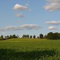 Hügellandschaft des Drawehn © Manfred Fortmann