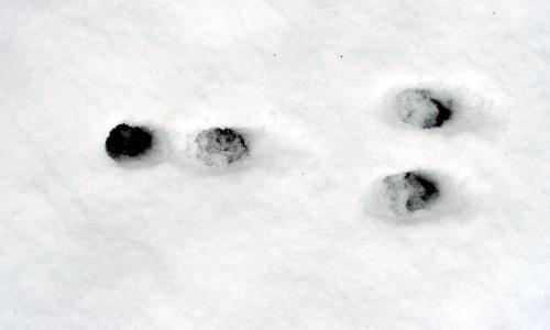 H.May Hasenspur 0410btext Entdeckertipp: Spurensuche im Schnee