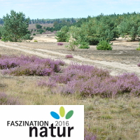 Heide_Archiv Naturpark-neu