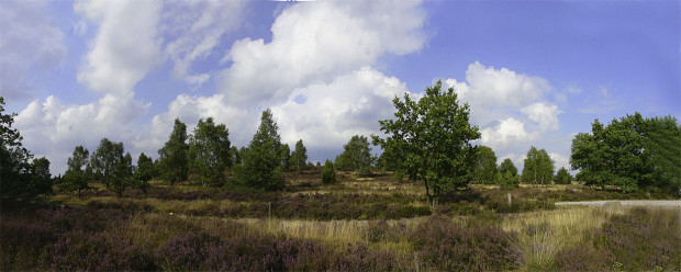 Heide Panorama2008 1 620x248 Bunter als Du denkst!   Naturpark Lüneburger Heide