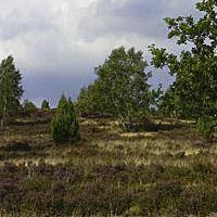 Heide_Panorama2008_1_beitragsbild